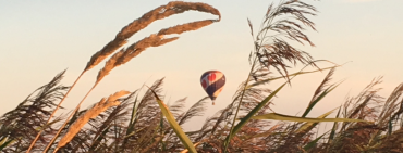 Ballon in Joure bij riet