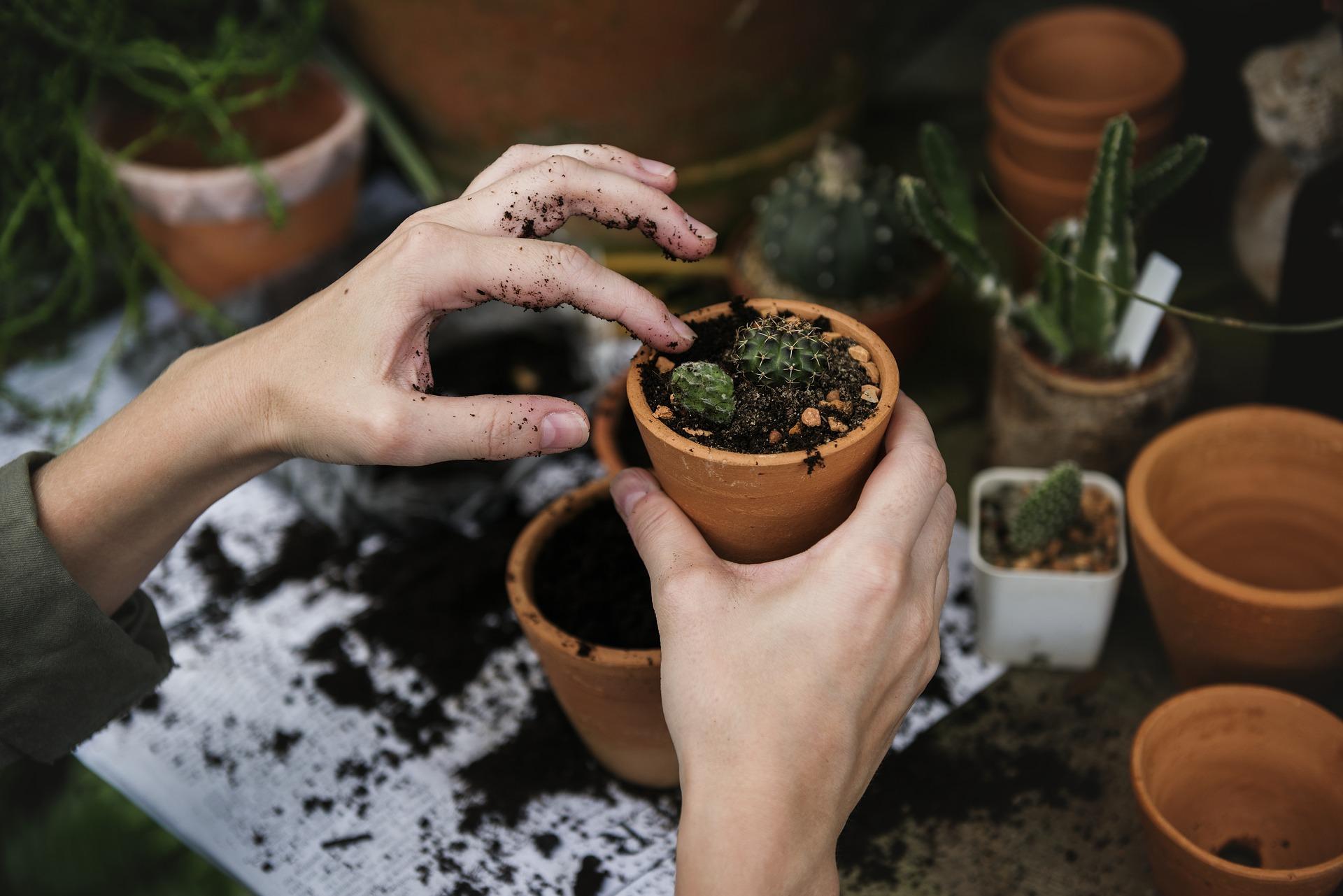 Plantsome, when nature calls